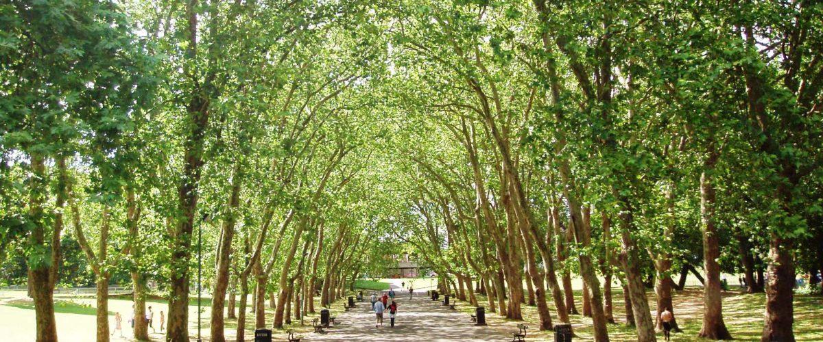 DORDA: Uzdrawiające parki